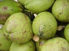 31231_coconut