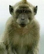 11-15_monkey