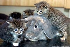 RabbitKit2NSPA_468x316
