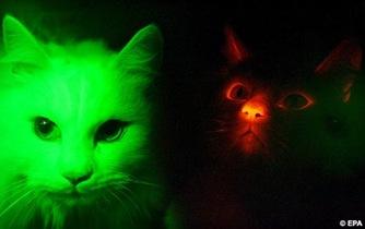 Cats2EPA1212_468x294