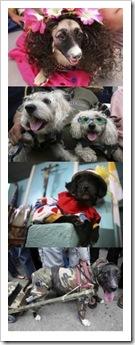 crazy.religious.dogs