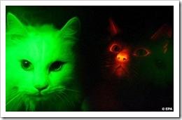 cats2epa1212-468x294